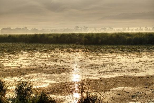 Dawn, Kaziranga National Park